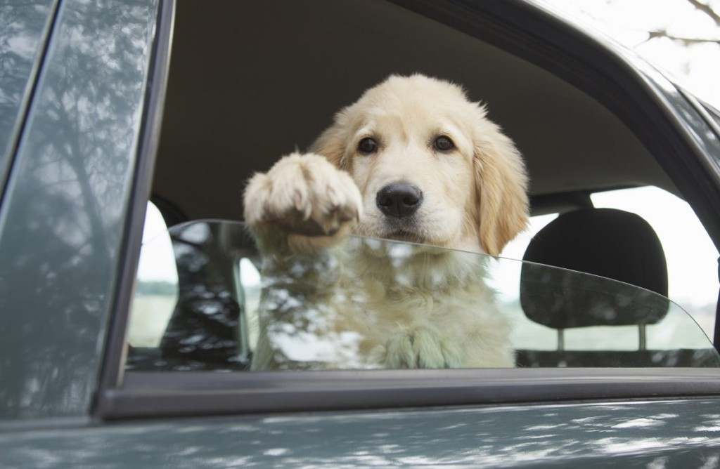 Ohio Law Dogs In Hot Cars