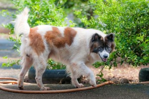 Common law negligence and dog attacks