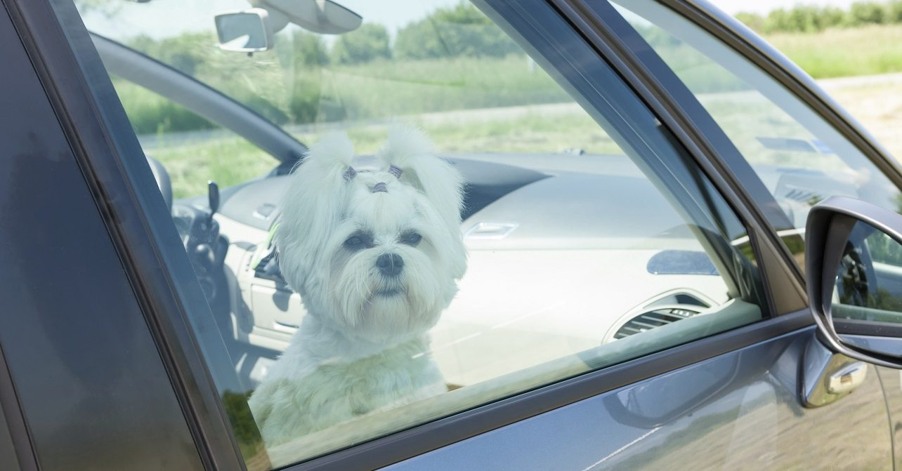 Ohio good samaritan laws allowing dogs stranded in hot cars to be rescued