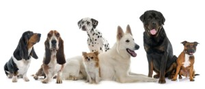 breed specific dog laws