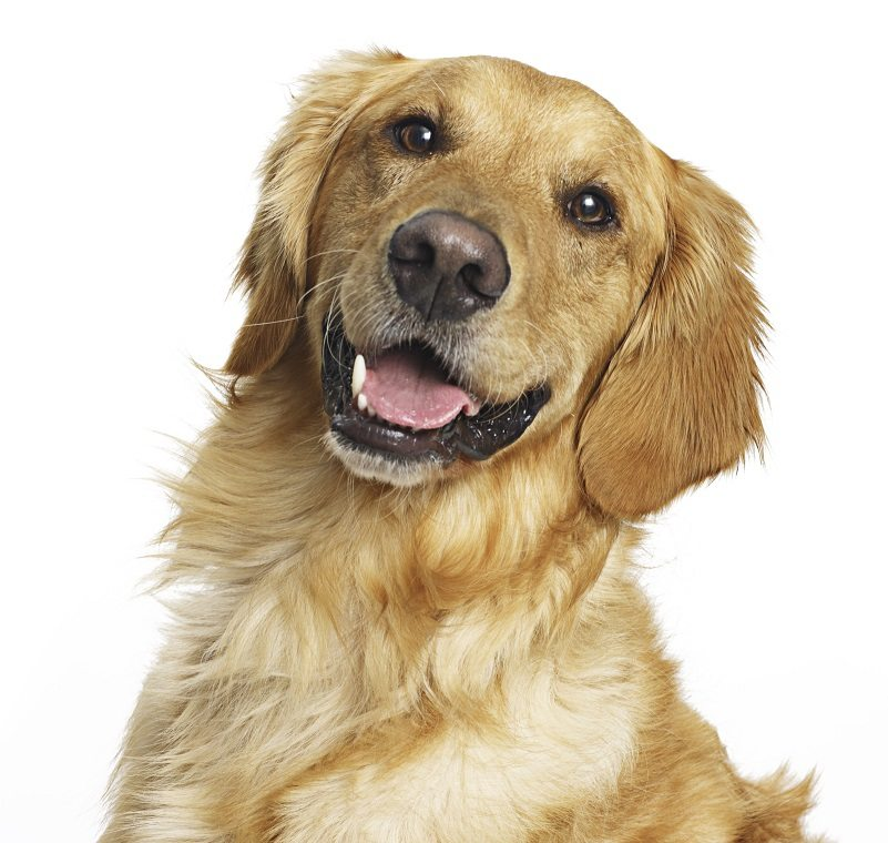 Norwalk Ohio and Huron County Dog Laws and Ordinances