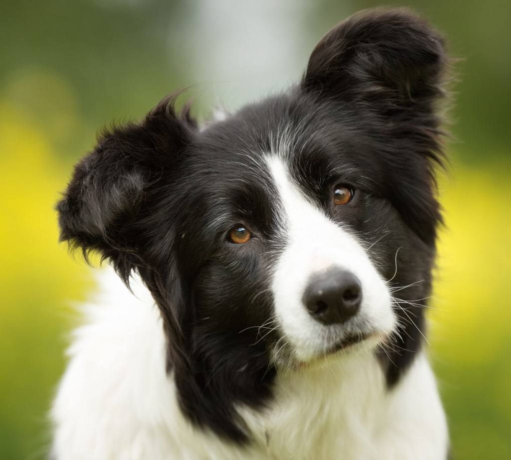 West Union and Adams County Dog Laws and Ordinances