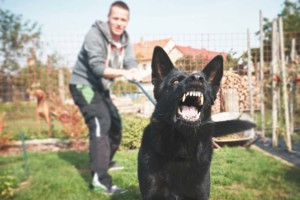 Dog Breeding For Aggressive Dog Behavior