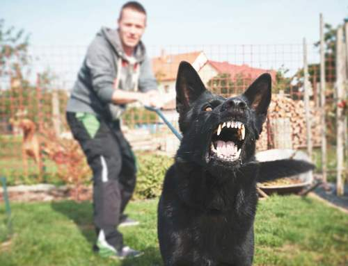 """""""Dangerous dog"""" owner can be charged based on dog's prior conduct."""