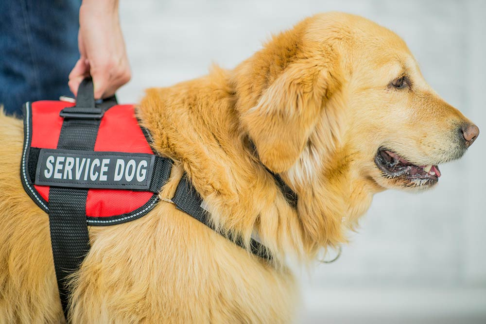Breeds of service dogs