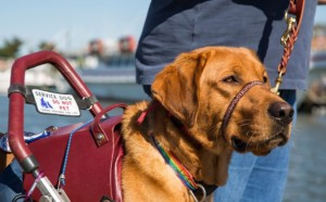 A History of the Service Dog