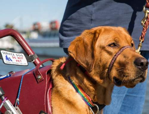 The History of the Service Dog