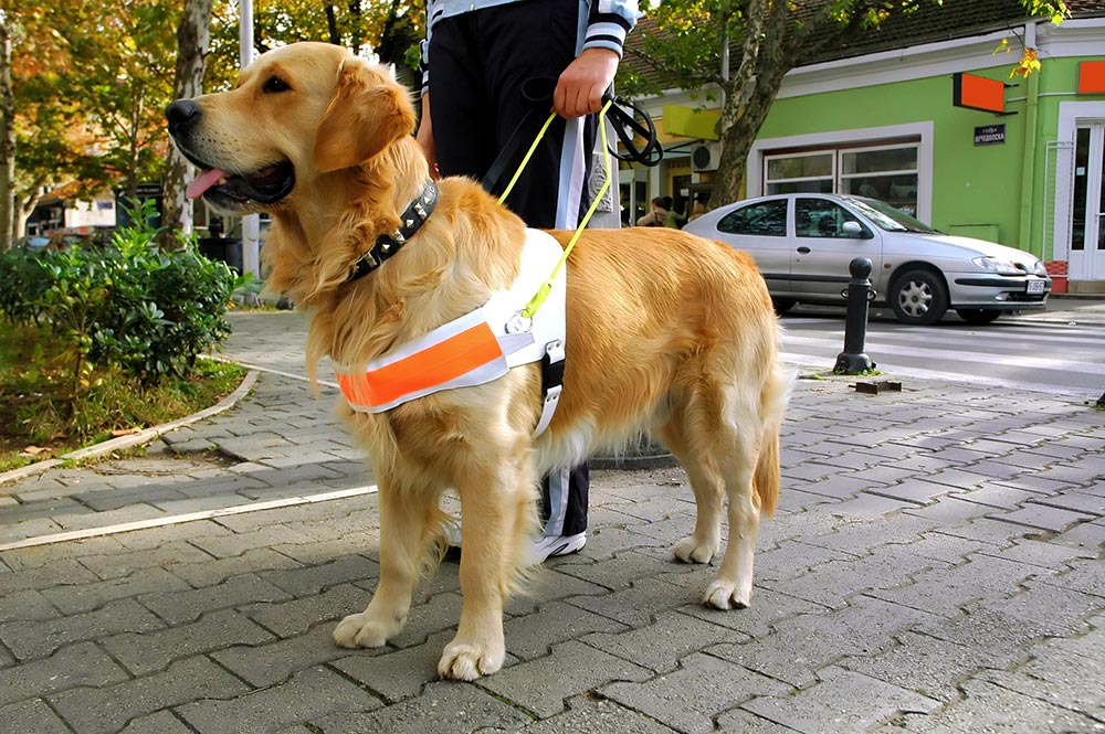 Service Animal Laws in Ohio For People With Disabilities