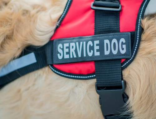 All You Need to Know About Service Dogs For Brace And Mobility Assistance