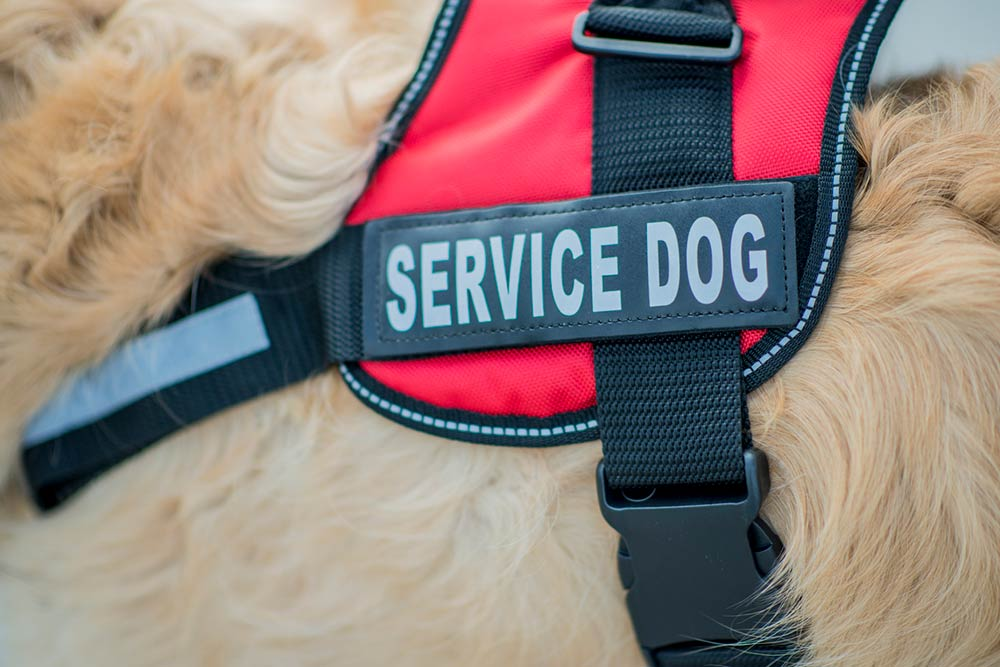 service dogs for brace and mobility assistance