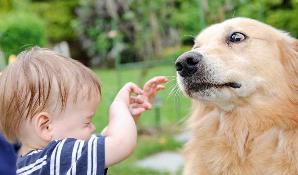 Do dogs smell fear and how to overcome a fear of dogs