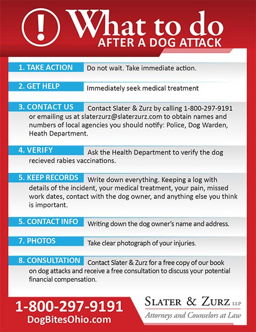 What to do after a dog bite magnet