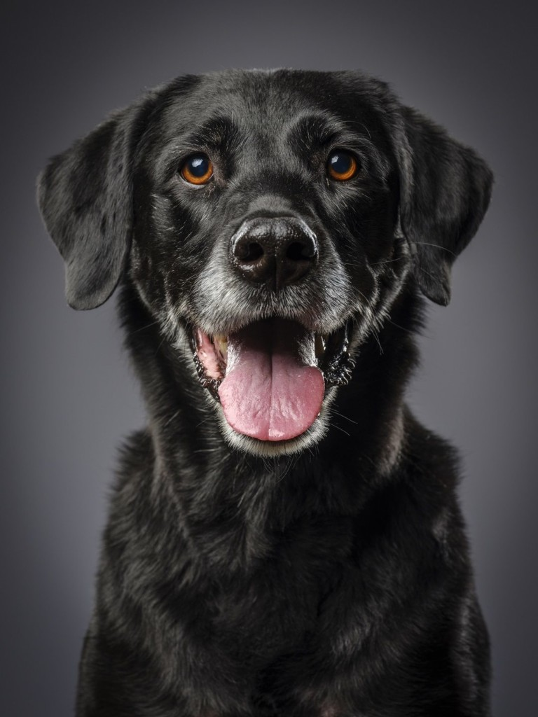 Lancaster Ohio and Fairfield County Dog Laws and Ordinances